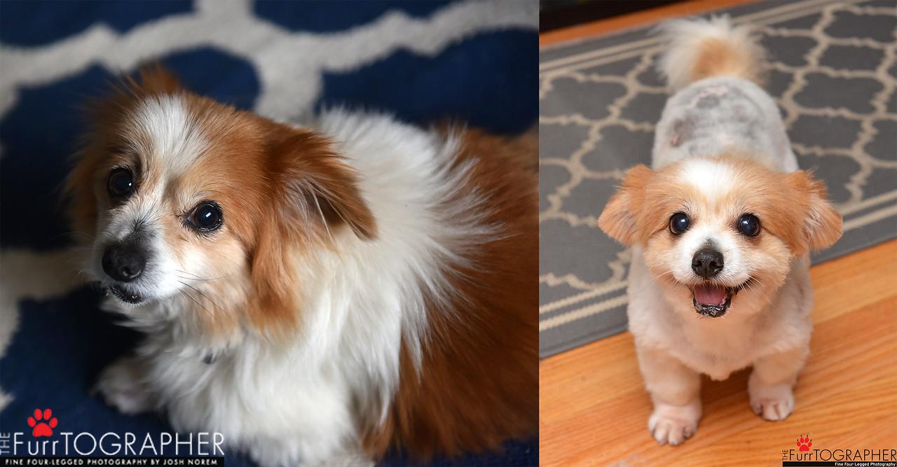 Gertie-1year-adoptaversary