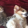 meow-growl