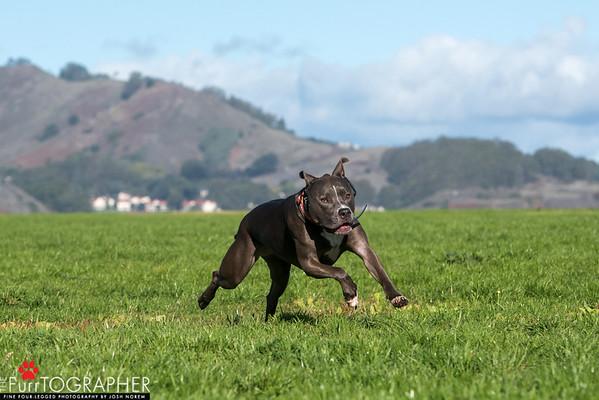 Stella (4)