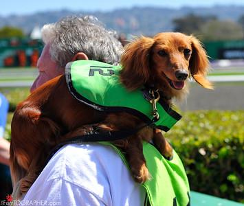 Weiner Dog Nationals 2011