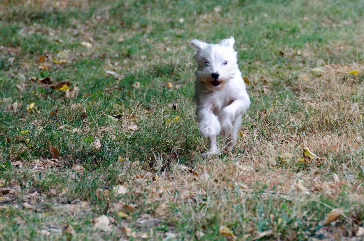Action dog!