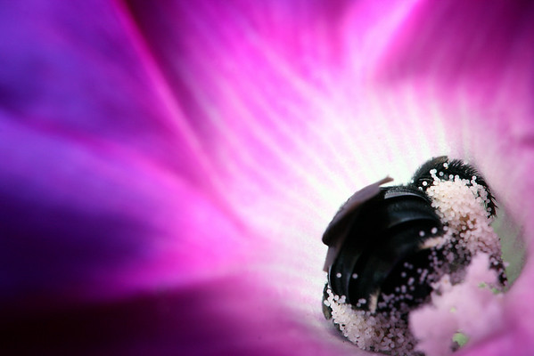 A bee, already covered in pollen, heads deeper into a purple flower.