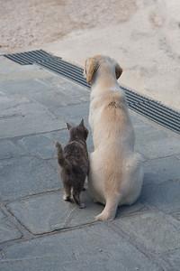 Odd friendships