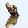 Turtles Gonna Climb