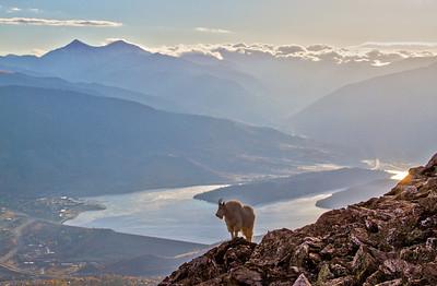 Goat above Paradise