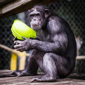 tampa-zoo-6394