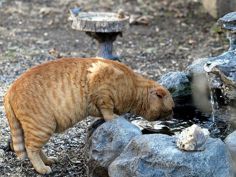 Catzilla Visited my Fountain