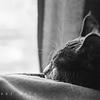 Sophie Enjoys the Afternoon Light