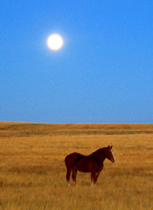 Moon Rise in Saskatchewan
