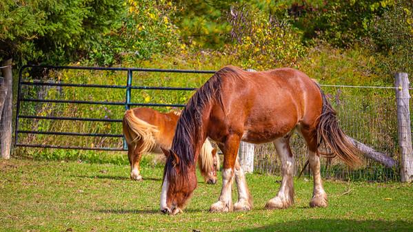 Big Horse, Small Horse