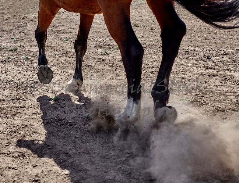 dressage horse with rider canter hoof legs closeup