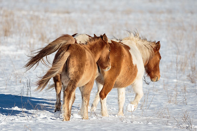 Day 43: Wild horses on the move