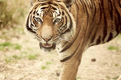 Zoo 096