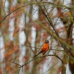 Bird sitting on the branch in the woods.