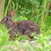 Bold Bunny