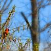 Beautiful bird  sitting on tree branch eating