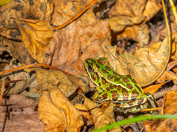 Frog on the Forest Floor