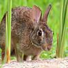 Very Curious Bunny