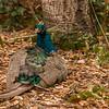 093015 NPGS - Peacock 001 5x7L