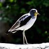 DSC_0067 Bird