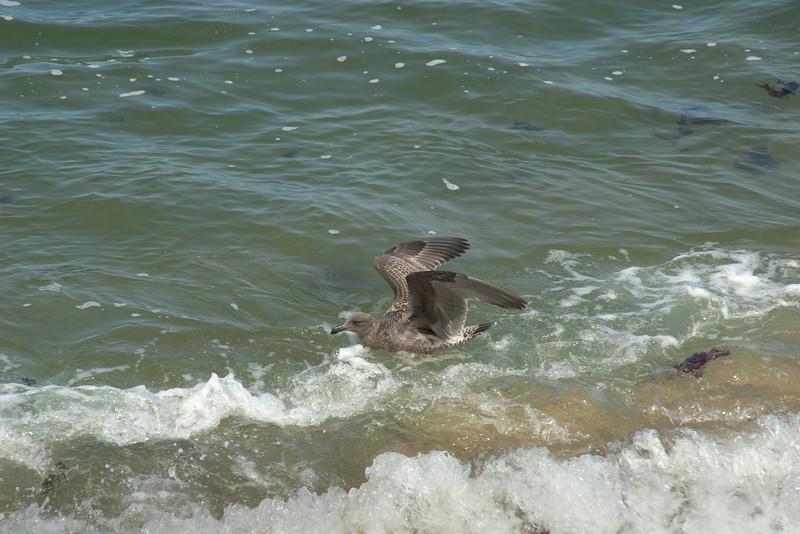 082412 Monterey Bay 007