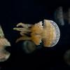 041012 Monterey Bay Aquarium 055