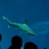122912 Monterey Bay Aquarium 070