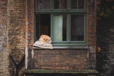 Fidel. Bruges, Belgium