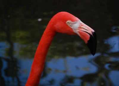 flamingo friend.