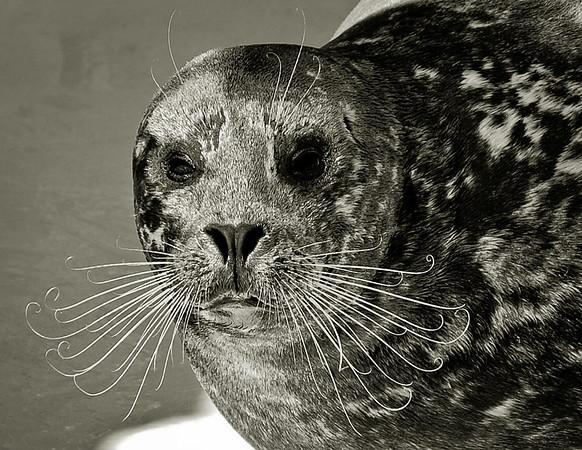 ol' man whiskers.