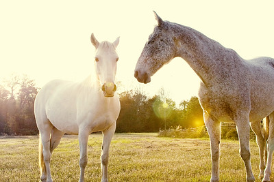 Horses 144-Edituncropped