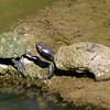 Turtle Tough