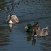 041313 El Estero Park - Monterey 010 5x7L