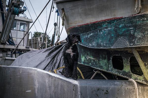 dog-in-boat