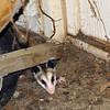 Hiding Under The Wheelbarrow