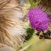 An Autumn Bee