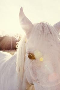 Horses 136-Edit