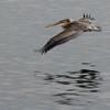 071011 Pelican - Monterey Beach 014 4x6L