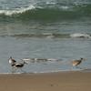 020512 Del Monte Beach 013 5x7L