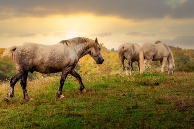 Sunny Warm Horses