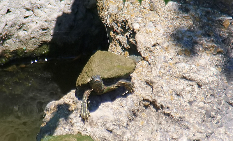Then The Map Turtle Saw Me