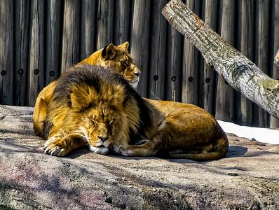 Cleveland Metroparks Zoo - Cleveland, Ohio