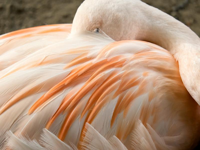 Flamingo Nap