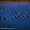 20120129_Bolsa Chica Reserve_3768