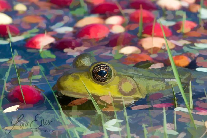 Frog in a Cranberry Bog - Painted