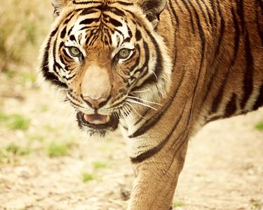 Zoo 096 8x10