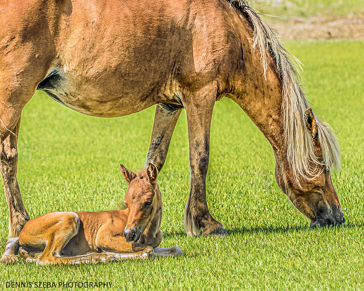 Wild Pony and foal