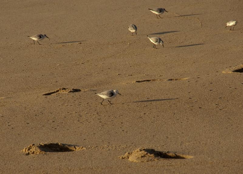 011312 Fort Ord Dunes SP 017 5x7L