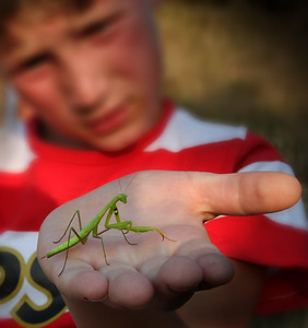 Praying mantis ready to eat a young boy