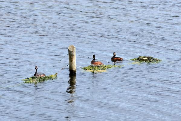 Nesting Family